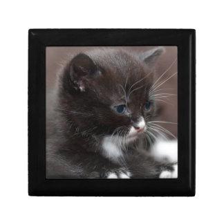 Kitten Giftbox Gift Box