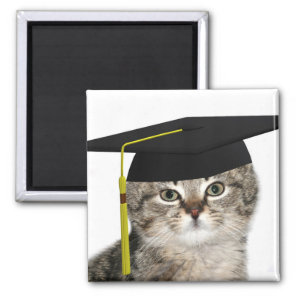 Kitten graduation magnet