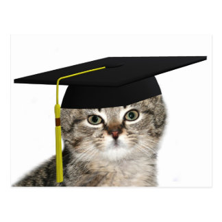 Kitten graduation postcard