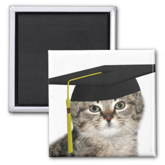 Kitten graduation square magnet