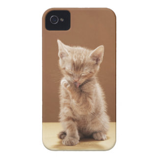 Kitten grooming iPhone 4 covers