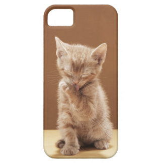 Kitten grooming iPhone 5 cases