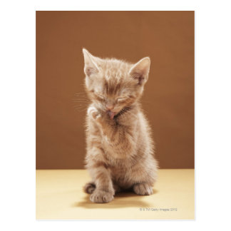 Kitten grooming postcard
