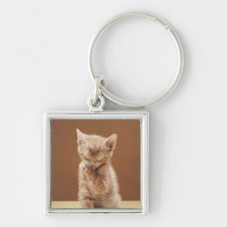 Kitten grooming Silver-Colored square key ring