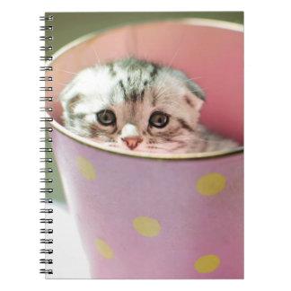 Kitten hide in candy bucket. notebooks