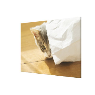 Kitten hiding in paper bag canvas print