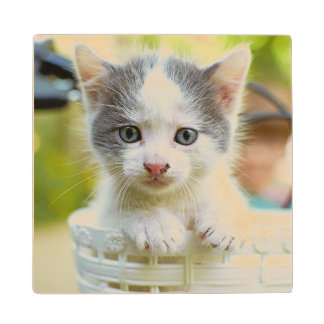 Kitten In A Basket On A Bicycle Wood Coaster