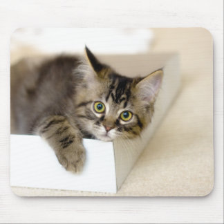 Kitten in a Box mousepad