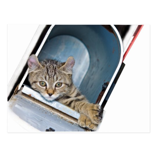 Kitten in a Mailbox Postcard
