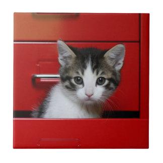 Kitten in a red drawer tile