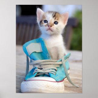 Kitten In A Shoe Poster