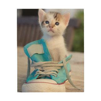 Kitten In A Shoe Wood Print