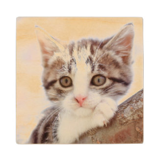 Kitten In A Tree Wood Coaster