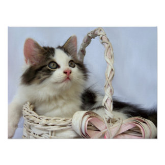 Kitten in Basket Fine Art Print