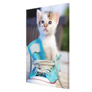 Kitten In Blue Shoe Canvas Print
