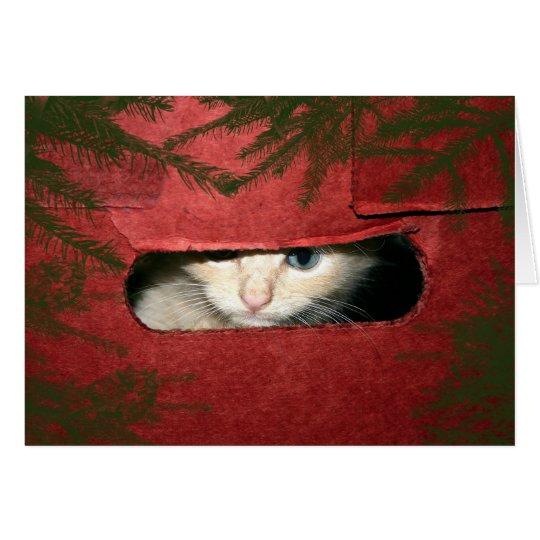 Kitten in Christmas box Card