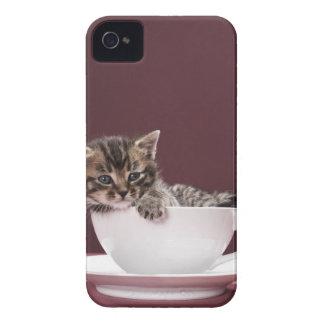 Kitten in cup and saucer iPhone 4 cover