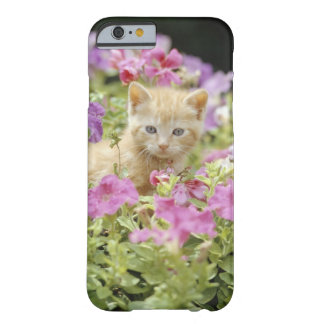 Kitten in flowers barely there iPhone 6 case