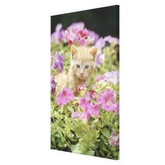 Kitten in flowers canvas print