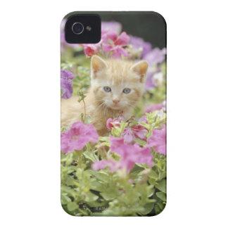 Kitten in flowers iPhone 4 cases