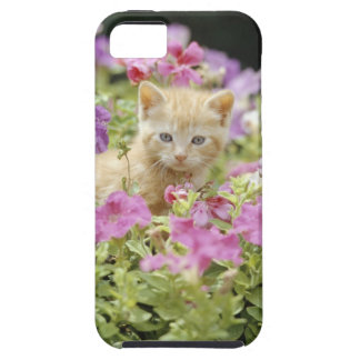 Kitten in flowers iPhone 5 covers