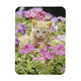 Kitten in flowers magnet