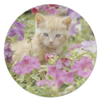Kitten in flowers plate