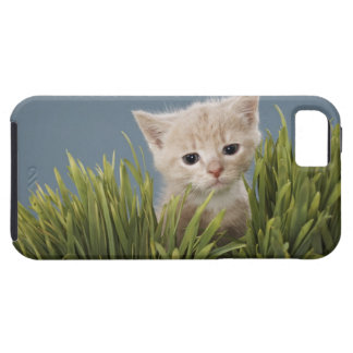 Kitten in grass case for the iPhone 5