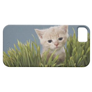 Kitten in grass iPhone 5 cover