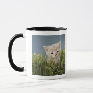 Kitten in grass mug