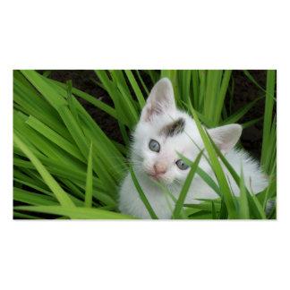 Kitten In Grass Pack Of Standard Business Cards