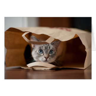 Kitten in Grocery Bag Card