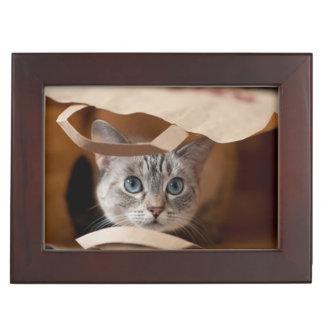 Kitten in Grocery Bag Keepsake Box