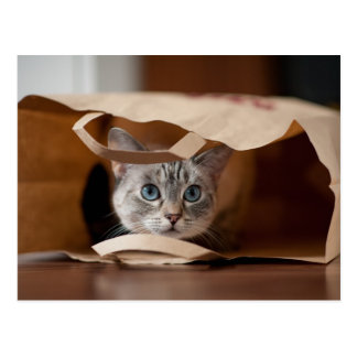 Kitten in Grocery Bag Postcard