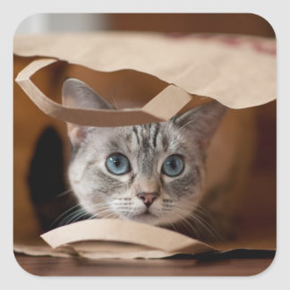 Kitten in Grocery Bag Square Stickers