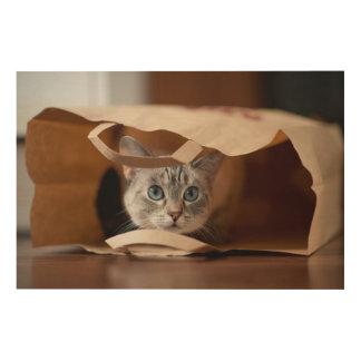 Kitten in Grocery Bag Wood Wall Art