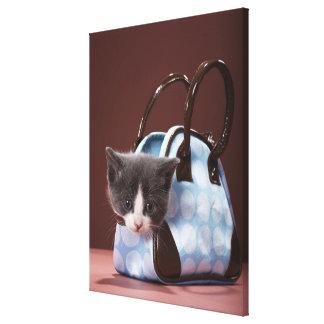 Kitten in handbag canvas print