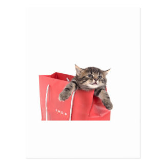 kitten in has bag red post cards