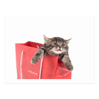 kitten in has bag red postcard