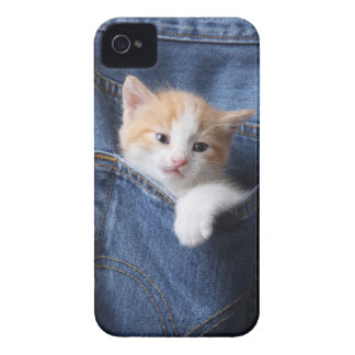 kitten in jeans bag iPhone 4 covers