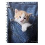 kitten in jeans bag note book