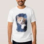 kitten in jeans bag shirts