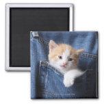 kitten in jeans bag square magnet