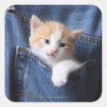 kitten in jeans bag stickers
