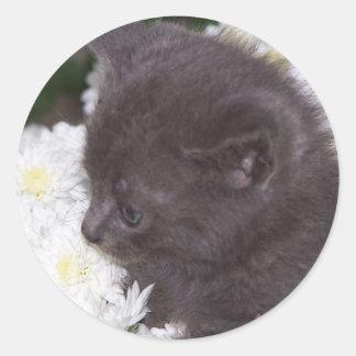 kitten in mums round stickers