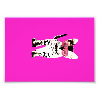 kitten in pink shades photo
