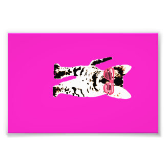 kitten in pink shades photo print