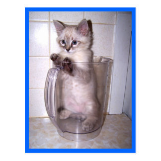 kitten in pitcher postcard