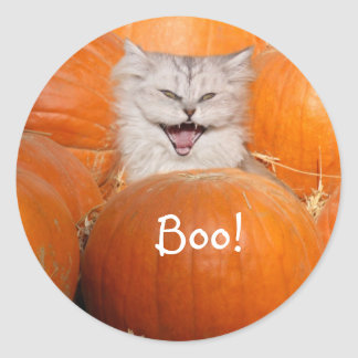 Kitten in pumpkins classic round sticker