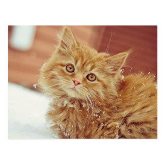 Kitten in Snow Post Card